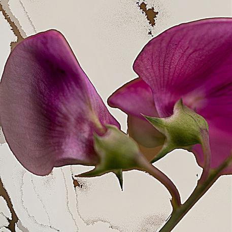 Violetta-af