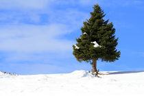 Schneelandschaft von Jens Berger