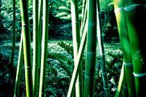Bamboo by Christian Hansen