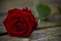 Rose mit Wassertropfen by Thomas Bytoff