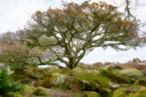 south england trees von Noémi Giteau