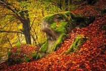 Autumn Forrest von Maciej Markiewicz
