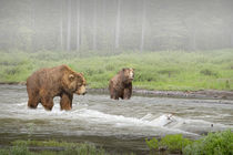 Grizzly Bears crossing a Stream by Randall Nyhof