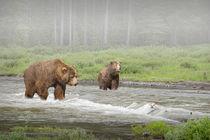 Anl-grizzlies-2441-2