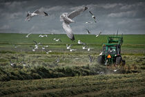 Gull chased Tractor by Randall Nyhof