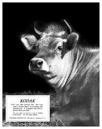 Prize Bull. Circa 1917. by chris kusik