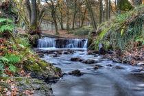 Cannop Brook  by David Tinsley