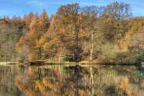 Cannop Reflections by David Tinsley