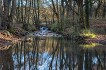 Cannop Brook - 2 by David Tinsley