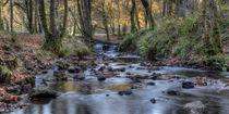 Cannop Brook Panorama von David Tinsley