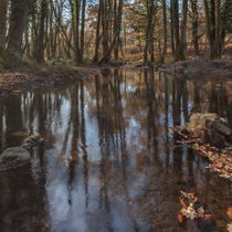 Reflections in the Stream by David Tinsley