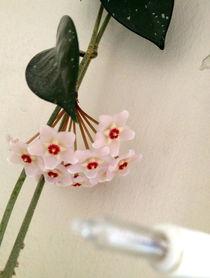flowerbomb by Christine Meyers