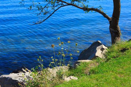 Waters-edge-lake-simcoe0100