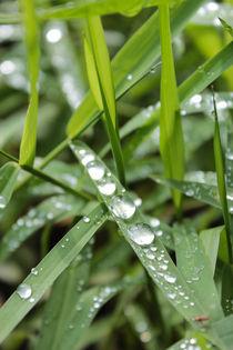 Raindrops 3 by Florentina Necunoscutu de Carvalho