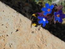 Bugs von Florentina Necunoscutu de Carvalho