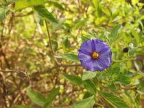 Purple little flower by Florentina Necunoscutu de Carvalho