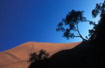 Uluru and eucalyptus bushes by Andrew Wheeler