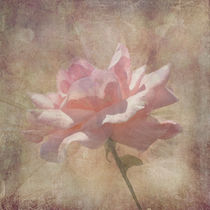 Soft Pink Grunge Rose by Rosalie Scanlon