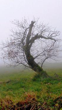 Haunted Fairyland by Juergen Seidt