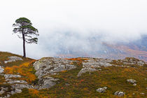 Lone Tree in the  Mist von Louise Heusinkveld
