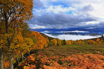 Misty day in the Cairngorms II von Louise Heusinkveld