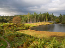Tarn Hows in autumn, Cumbria von Louise Heusinkveld