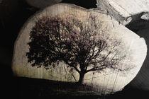 Holz  lebt  by Barbara  Keichel