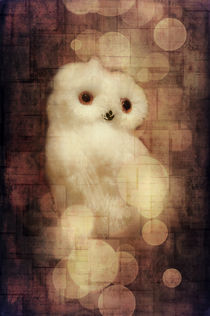 O Owly Night von loriental-photography