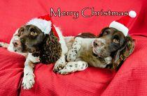 Merry-springers