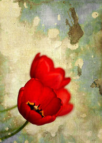 Red Flowers With Moody Grunge Canvas Texture and Stains by Denis Marsili