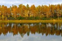 Autumn forest reflected in the water by larisa-koshkina