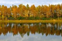 Autumn forest reflected in the water von larisa-koshkina