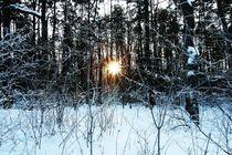 Wintergrüße by Marina von Ketteler