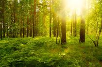 Forest landscape von larisa-koshkina