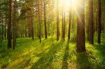 Forest landscape by larisa-koshkina