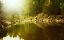Fairy forest by larisa-koshkina