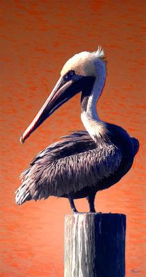 Graceful Pelican von Mike Darrah
