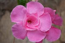 Pink flower 2 by Florentina Necunoscutu de Carvalho