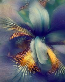 Purple Haze by William Schmid