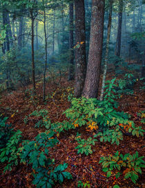 Smoky Mountain Morning by William Schmid