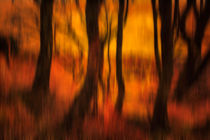 Abstract Of Trees In A Forest by Derek Beattie