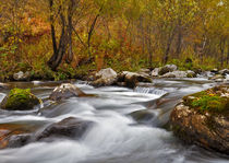 Fast flowing river on the background of the autumn forest by larisa-koshkina