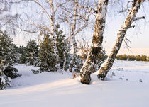 Background with a winter landscape by larisa-koshkina