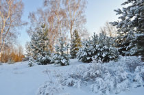 Winter background von larisa-koshkina