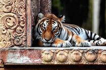 Bengal Tiger by John Rizzuto