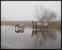 Crossing-the-water9072
