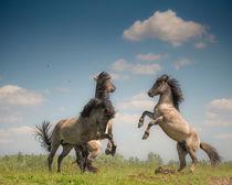 Prancing Horses. von Henri Ton