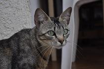 portrait of a cat by Florentina Necunoscutu de Carvalho
