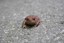 Asphalt Frosch von Sören Sievers