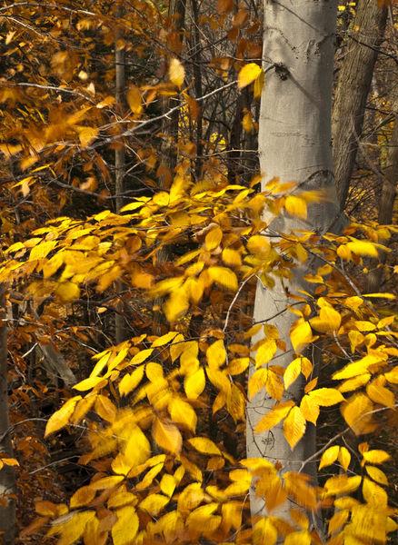 Tree-24tree-motion
